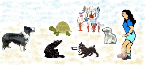 turtoise01